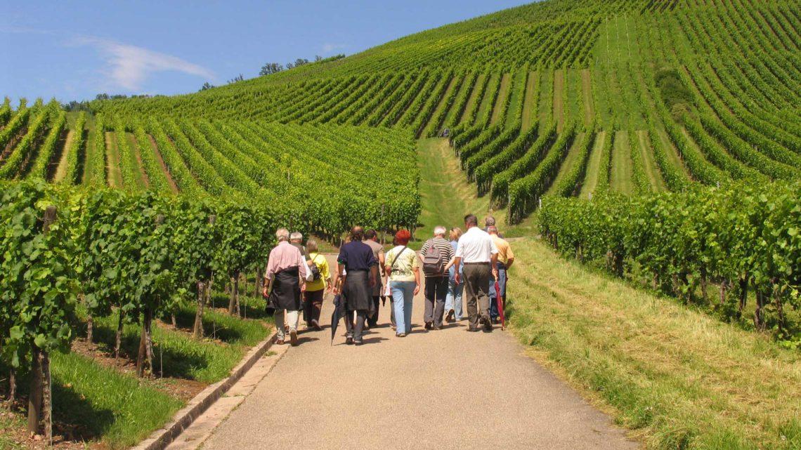 Die Ferienregion Marbach-Bottwartal – Wandergenuss für Geist und Gaumen